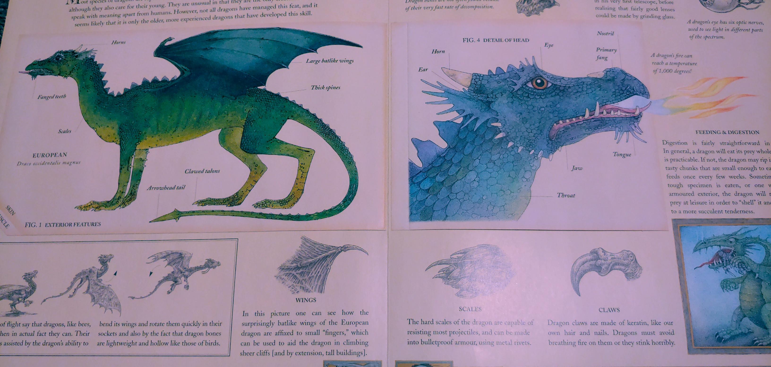 dragon anatomy and text